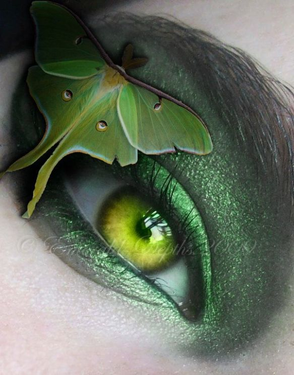 luna-moth-eye